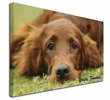 More details for red setter dog 'yours forever' x-large 30