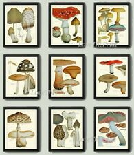Unframed Botanical Print Set of 9 Prints Antique Vintage Mushrooms Kitchen Art