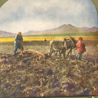 VTG Color Stereoview Card Farmer Plowing Field China Manchuria TW Ingersoll 1905