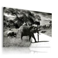 DESERT ELEPHANT Wild And Domestic Animals Canvas Wall Art Picture Large AN194 X