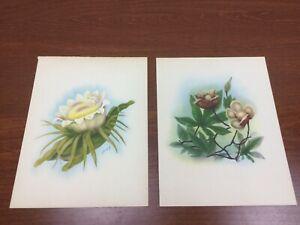2 Vintage~WOOD ROSE & Floral Tropical~Ted  Mundorff~ Art~HAWAII Prints 8 x 10
