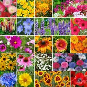 Wild Flower / Wildflower Seeds - Help Save the UK Bees 5g to 500g