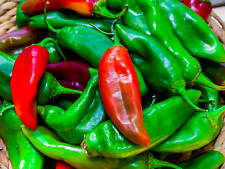 ¼ Gram New Mexico #6 Pepper seed.  Mild Heat, OG/OP, No-till, Red or Green?