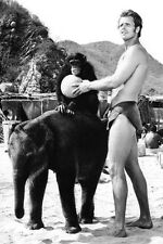 Ron Ely Tarzan 11x17 Mini Poster chimp baby elephant