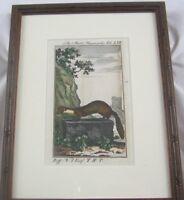 Antique Original 1785 Das Mart Hausmarder By Buff