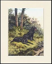 FLAT COATED RETRIEVER TWO DOGS DOG PRINT MOUNTED READY TO FRAME