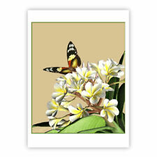 © ART  butterfly white Frangipani Insect Flower Artist illustration Print by Di