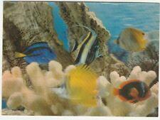 3 D Lenticular    FISH, , TOPPAN, JAPAN