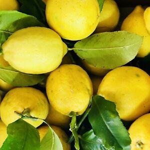 Limoni del Salento BIO NON TRATTATI Prod. Propria 10kg