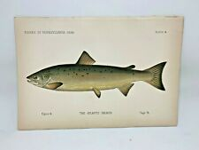 Scarce First Denton Fish Print - 1889 - Atlantic Salmon - Original