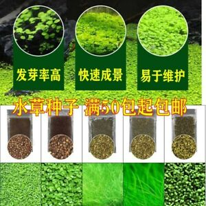 Water Grass Seed Fish Tank Aquarium Landscaping Decoration Seeds