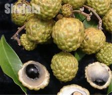 5pcs/bag Lychee Subtropical Seasonal Fruit Fresh Seeds Litchi Bonsai Rare Sweet