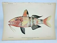Antique Lithographic Print Reef Fishes Hawaiian Islands Bien 1903 Plate 22