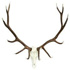 Elk European Mount - Elk Antlers