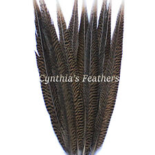 "Pheasant Feathers Natural Golden Pheasant Tail Feathers 10 Pieces 14-16"" Long"