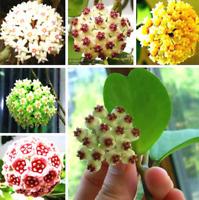 100Pcs Orchid Ball Flower Seeds Rare White Bonsai Perennial Plant For Garden