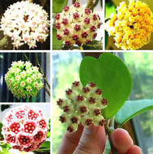 100Pcs Orchid Ball Flower Seeds Rare White Bonsai Perennial Plant For Garden