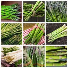 50pcs Asparagus Vegetable Seeds 10 Kinds Garden Delicious Organic Healthy Plants
