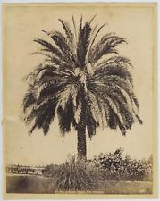 Italie, Napoli, La Palma, Villa Nazionale Vintage albumen print. Tirage albumi
