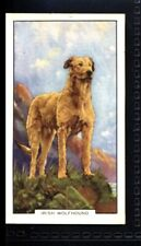 Gallaher Dogs 2nd Series 1938 - Irish Wolfhound No. 1