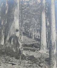 "FRED BERRY WESTERN AUSTRALIAN B&W PHOTOGRAPH ""WA TALL TIMBER TREES"" 1940"