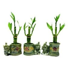 Plant 3 Sets Lucky Bamboo Arrangements in 3 Different Shapes Vase with Elephant