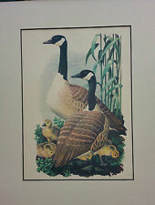 Paintings/Posters/Prints Mixed Birds Collectables