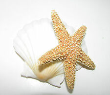 Coquillage Sugar Starfish Fascinator Pince Cheveux Sirène Plage Nuptial Orange