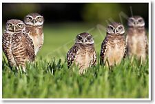 Five Burrowing Owls - NEW Animal Wildlife POSTER