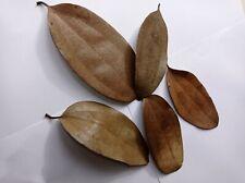 100 Dried Cinnamon Leaves Organic,Natural,Gift Ceylon Herbal Leaves Home Garden