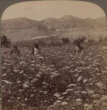 Palestine. Mountains of Judea from the Plain of Jericho. Underwood Stereoview