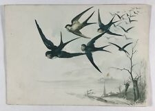 Antique Danish Illustrated Greeting Card Embossed Bird Decoration Swifts Denmark