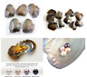 5/10/25/100 PCS Individual Wrapped Oysters with 7-8mm Natural  Large Pearls Gift