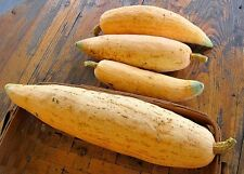 Pumpkin CANDY ROASTER-Pumpkin Seeds-SWEET HEIRLOOM-20 LARGE SEEDS.