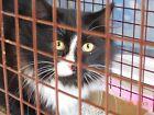 HELP SPONSOR TNR SPAY NEUTER FEED FERAL CATS NONPROFIT RESCUE CHARITY FreyaCat