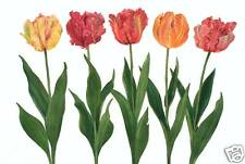 Multi Colored Parrot Tulip Watercolor, Red, Pink, Yellow and Orange