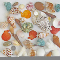 Approx 150g Mixed Beach SeaShells Sea Shells Shell Craft Table Decor Aquarium