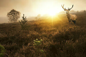 STUNNING SCOTTISH RED DEER STAG CANVAS #29 WILDLIFE WALL HANGING PICTURE ART A1