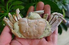 96g Rare Original Crab Fossil specimen Madagascar 2#