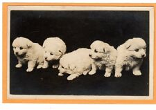 Real Photo Postcard RPPC - Five Chubby White Puppies - Dog