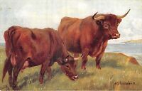 POSTCARD    DEVON  CATTLE           Tuck