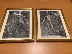 2 Antique Prints Framed Anatomy By Bernhardt Siegfried Albinus