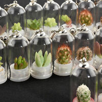 Mini Cactus Miniature Succulent Cacti Terrarium Wearable Necklace Live Plant EY