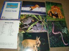 Educational Teacher's Picture Cards Houghton Mifflin Science California: Kinderg