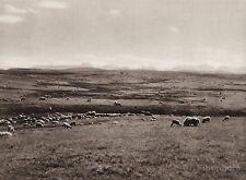 1925 Original CANADA ~ Rockies Sheep Ranch Mountain Landscape Alberta Photo Art