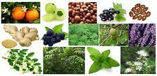 29.6ml 100% Pure Essentiel / Naturel Base Huile Herbes Botanique Organique