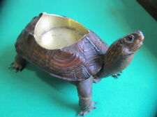 Antique Victorian era Taxidermy Turtle - with Small Brass Bowl - Very Rare