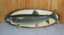 """36"""" Lake Trout Real Skin Taxidermy Canadian Caught Log Mounted Fish 35 Pounds"""
