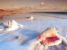 PHOTOGRAPH SEA SHELLS BEACH SAND HOLIDAY CONCH FINE ART PRINT POSTER CC1500