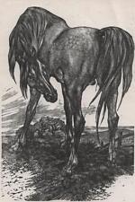 Leslie Charlotte Benenson signé Gravure sur Bois Gris Arabe STALLION HORSE 1975